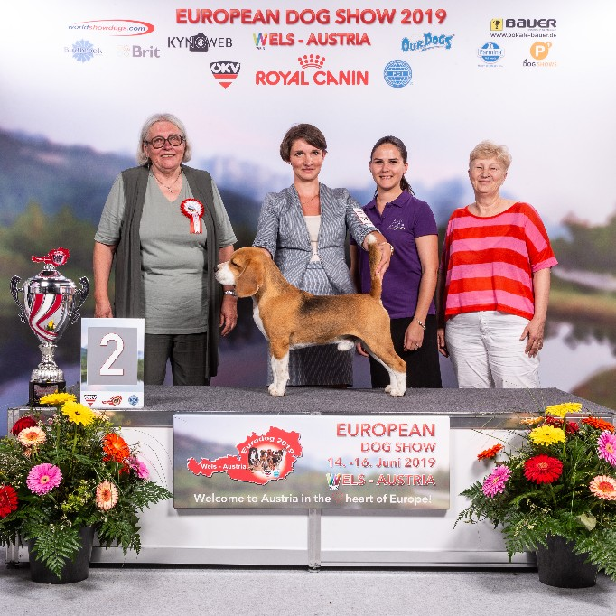 GROUP_6_2_12918_HR_EURODOGSHOW_WELS_2019_KYNOWEB_KY2_8680_20190616_19_06_03_copy_682x682.jpg
